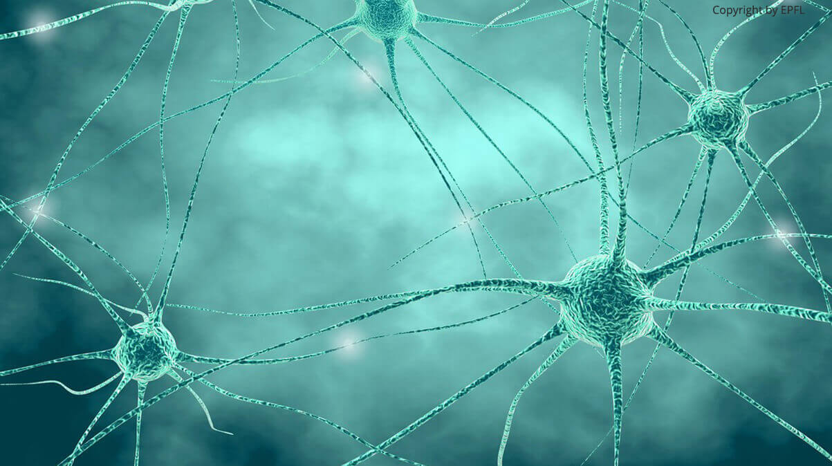 Using water molecules to unlock neurons' secrets